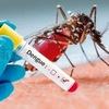 Dengue (Reprodução)
