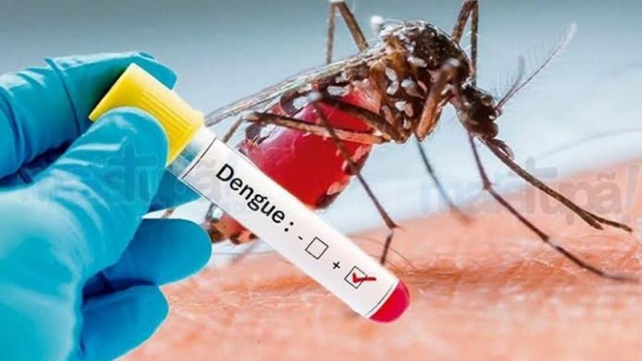 Dengue perde força na América Latina após recorde de casos em 2019 - Dengue (Reprodução)