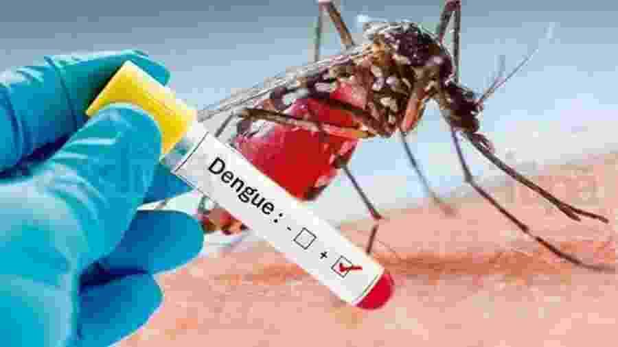 Dengue (Reprodução) - Dengue (Reprodução)