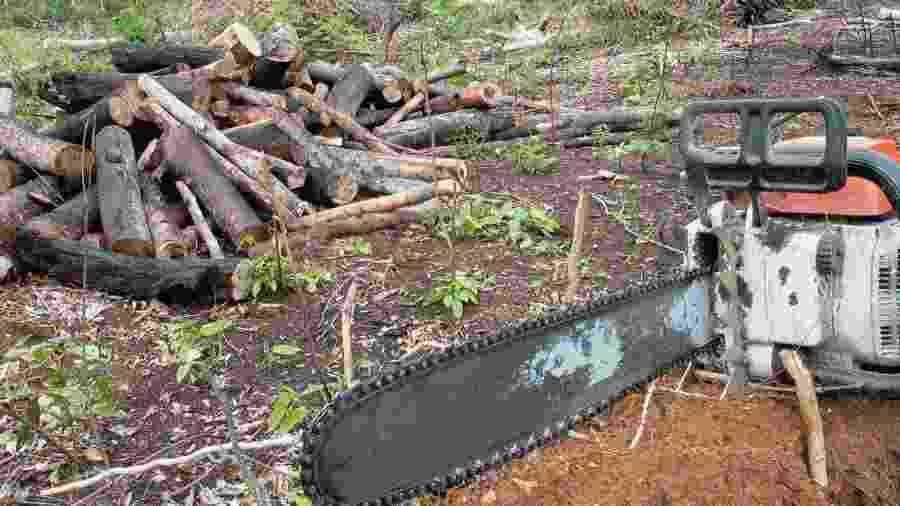 Governo Bolsonaro flexibilizou em março exigências para exportação de madeira brasileira -  Agência Brasil