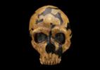 Neandertais não eram tão violentos quanto pensávamos, diz nova pesquisa - Creative Commons/Wikimedia