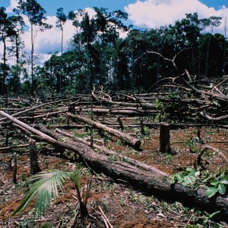 Brasil não está fazendo o suficiente para conter desmatamento ilegal, diz executivo da Natura - Getty Images