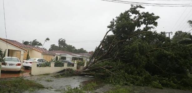 Árvore cai com a chegada do furacão Irma neste domingo (10), em Miami, na Flórida