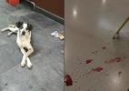 Vídeos mostram segurança, barra de metal e cão ferido; MP abre inquérito - Foto: Reprodução/Redes Sociais