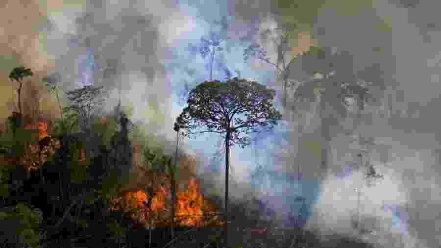 AMAZôNIA                              -                                 CARL DE SOUZA/AFP