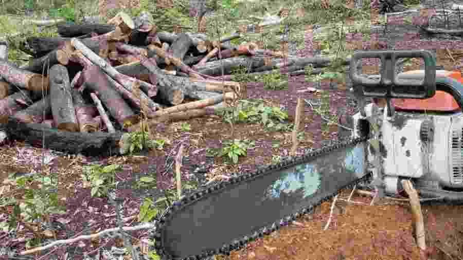 Ministério amplia prazo para ações da Força Nacional na Amazônia Legal -                                 Arquivo/Agência Brasil