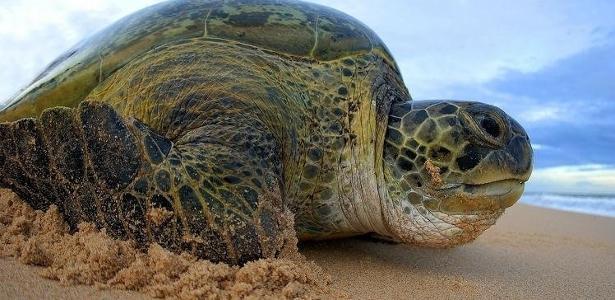 Foram retiradas pelo menos 42 ações regulatórias pendentes sobre espécies ameaçadas; uma delas sobre a tartaruga-verde