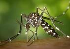Zika está sofrendo mutações, o que pode dificultar vacina, alerta cientista (Foto: Foto ilustrativa: Pixabay)