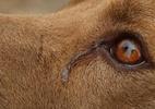 Projeto prevê aumentar penas de quem maltrata animais - Foto: Pixabay