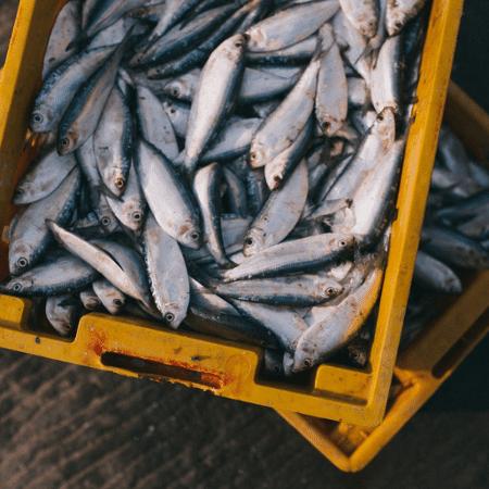 """Síndrome de Haff, também conhecida como """"doença da urina preta"""", é causada por pescado contaminado  - Pixabay"""