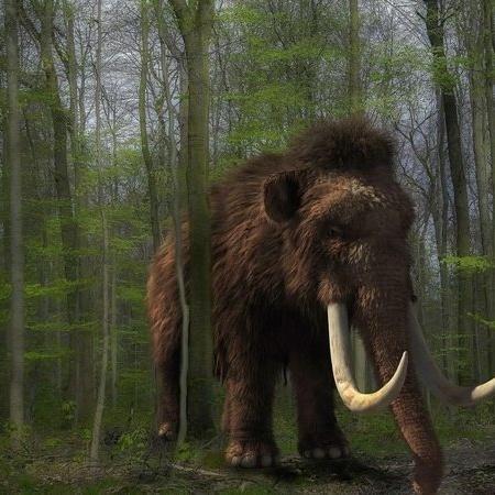 Mamutes foram xtintos há cerca de 5.600 anos - Divulgação/ Pixabay/ Michi-Nordlicht