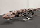 Experimento fascinante busca recriar a marcha de um dos primeiros animais a caminhar na Terra, há 300 milhões de anos