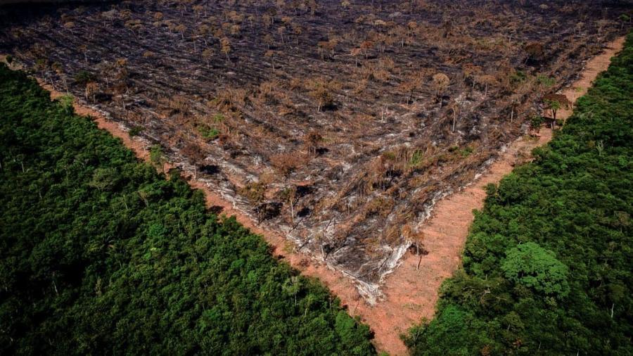 """""""Estratégia ambiental do governo é míope e de curto prazo"""", diz ex-secretário do Ministério da Agricultura  -  Ibama"""