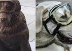 Cão que ajudou a resgatar vítimas em terremoto no México ganha estátua - Foto: Facebook/Tony Gali Fayad e AFP