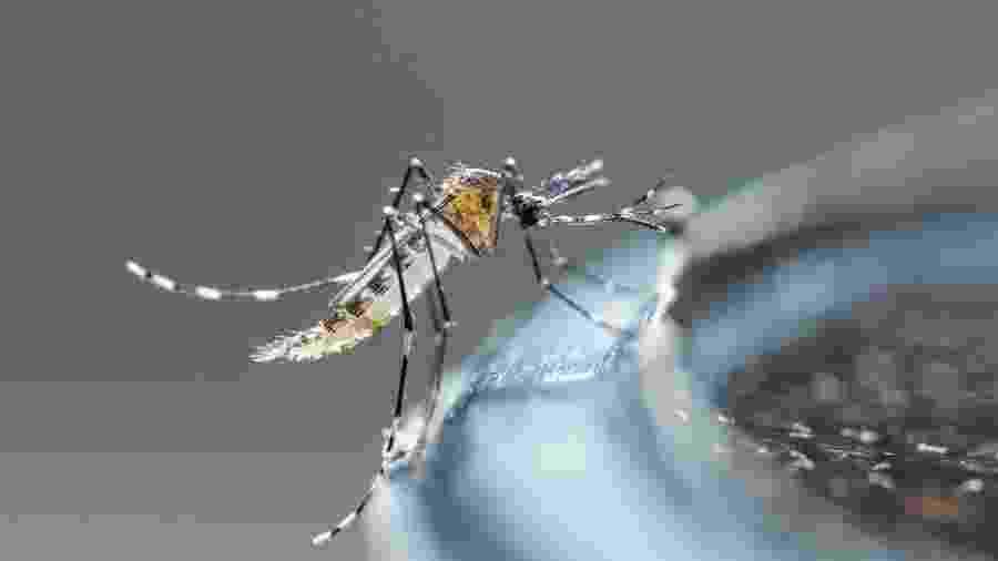Brasil registra segundo maior número de mortes por dengue em 21 anos - Adobe Stock