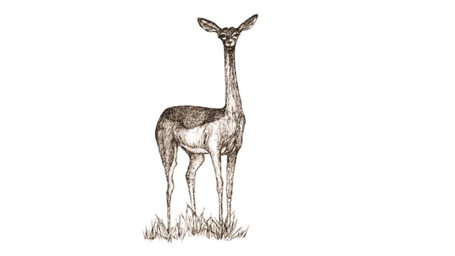 Ilustração de Pequena Enciclopédia dos Seres Comuns - Julia Panadés