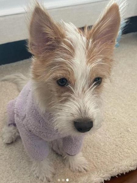 Hank, cachorrinho adotado por Rosé, do BLACKPINK - Reprodução/Instagram