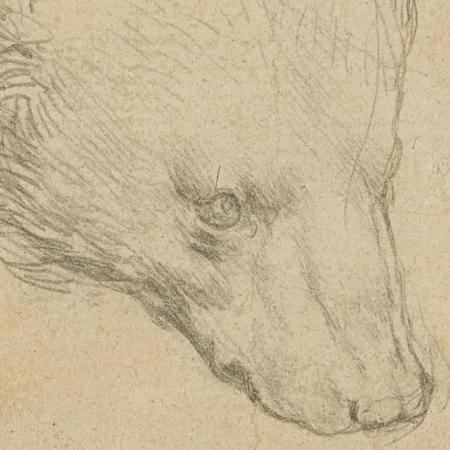"""Desenho de uma cabeça de urso de Leonardo da Vinci vai à leilão - Divulgação /  Christie""""s Auctions & Private Sales"""