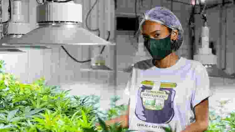 O comércio da Cannabis em muitos estados americanos está na lista de serviços essenciais. Na Abrace, em João Pessoa, o cultivo e a produção de medicamento não parou com a pandemia - Cesar Matos/Divulgação - Cesar Matos/Divulgação