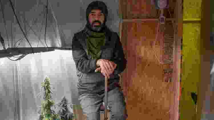 O ex-gerente de TI e projetos Augusto Saraiva, que planta maconha em casa para uso medicinal - Tiago Coelho/UOL - Tiago Coelho/UOL
