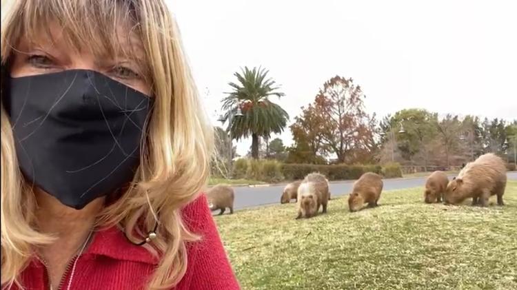 Nora Nouch, Organización Nuevo Delta, Gran Buenos Aires, Archivo prepersonal de muchos capibaras - Archivo personal