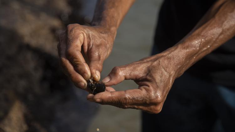Cláudio Marsel retira mexilhões da pedra, próximo à caverna em que mora há mais de oito anos. A moradia improvisada está embaixo da pedra que sustenta o MAC-Niterói - Ricardo Borges/UOL - Ricardo Borges/UOL