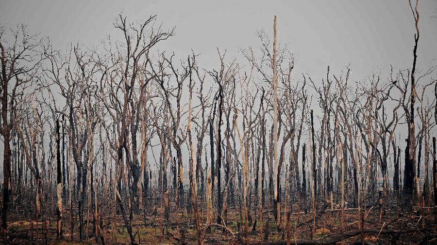 Área de queimada da Floresta Amazônica, na cidade de Abunã, em Rondônia - Carl de Souza/AFP