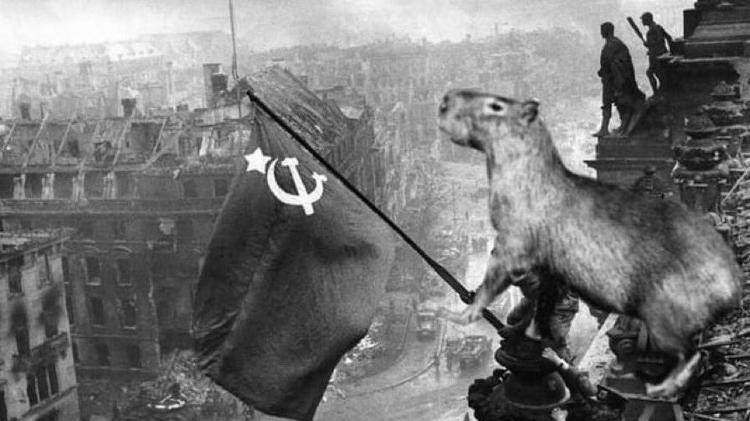 El capibara se vuelve viral por la presencia de animales en un complejo de lujo en el Gran Buenos Aires - Reproducción / Twitter - Reproducción / Twitter