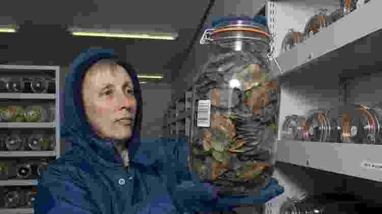 Cientista manipula potes no banco de sementes do Kew Gardens, no Reino Unido - Andrew McRobb/Divulgação - Andrew McRobb/Divulgação