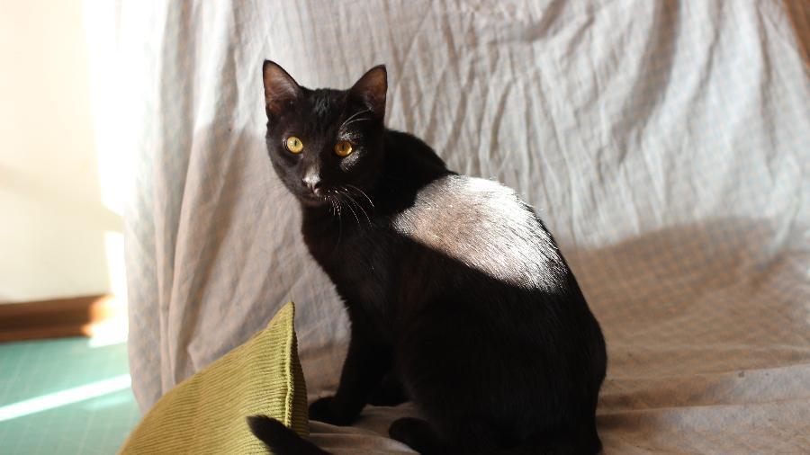 O gato Quarenteno, do artista gráfico Ravi Novaes - Arquivo pessoal