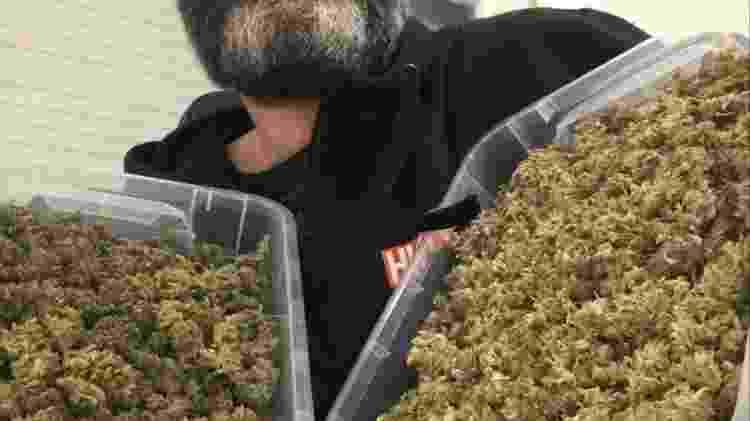 William mostra a colheita no Uruguai - Arquivo pessoal - Arquivo pessoal