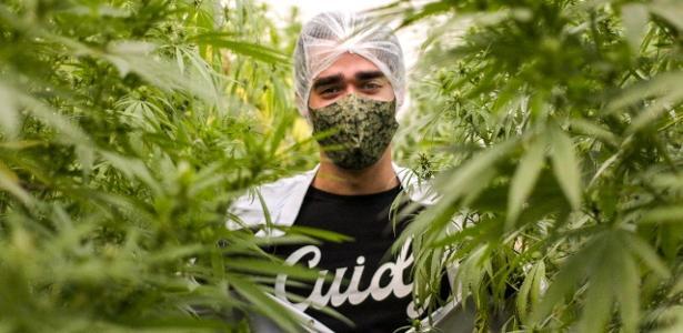 Por que a cannabis tem sido considerada item essencial durante pandemia