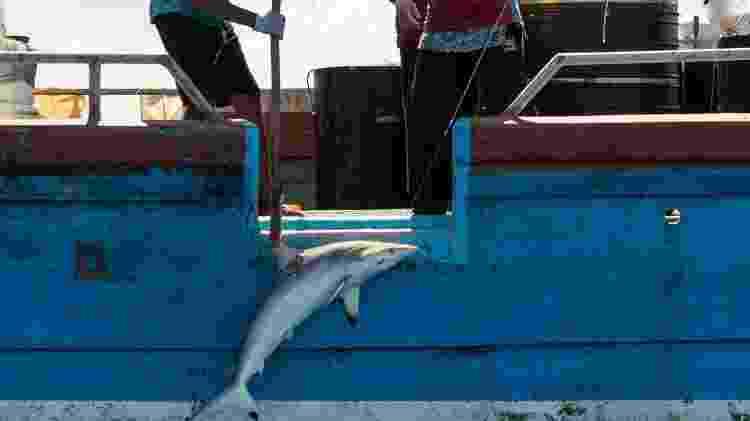 Tripulação transporta um tubarão no oceano Índico - Laurel Chor/Greenpeace - Laurel Chor/Greenpeace