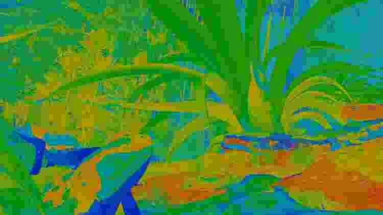 """""""Inside Tumucumaque"""" convida os visitantes a experimentarem estar no corpo de animais em uma reserva amazônica - Divulgação"""