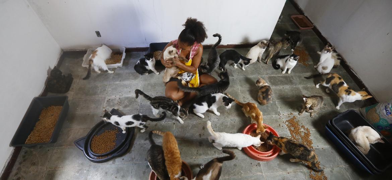 Irlaneide Carmem dos Santos, 52, já chegou a cuidar de 200 gatos em casa - Rafael Martins/UOL