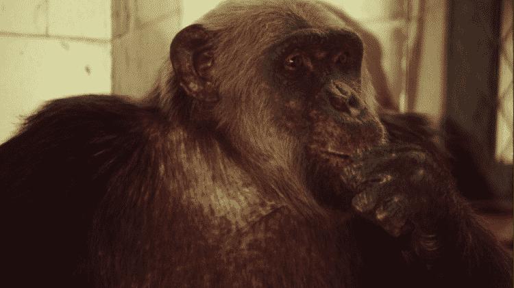 Macaco Tião - Reprodução - Reprodução