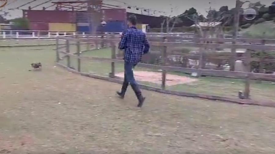 Marcos corre atrás dos porcos - Reprodução/R7