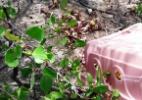 Quase 300 guaiamuns e caranguejos de volta ao manguezal - Divulgação