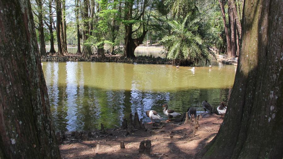 Parque do Horto Florestal, em São Paulo, pode ser concedido à iniciativa privada - Divulgação