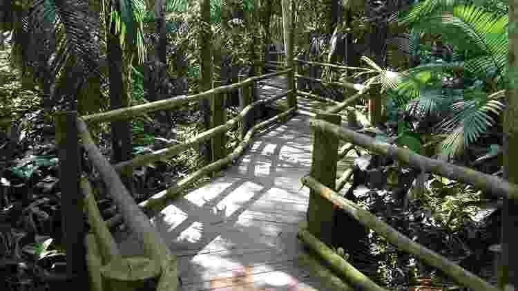 Trilha da Nascente, no Parque Estadual Fontes do Ipiranga - Acervo Fundação Florestal