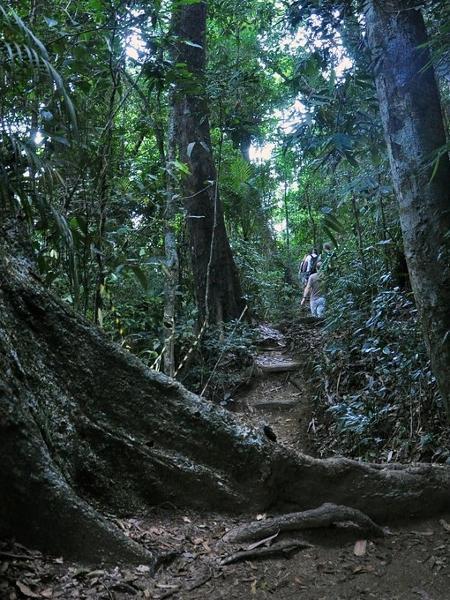 Floresta da Tijuca é a terceira maior floresta urbana do mundo - Alexandre Macieira/Riotur