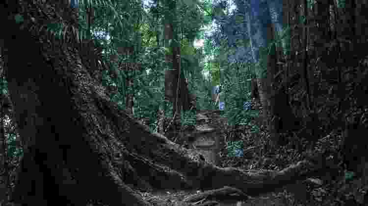 Floresta da Tijuca - Alexandre Macieira/Riotur - Alexandre Macieira/Riotur