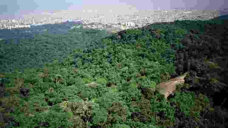 Trilha da Pedra Grande - Acervo Fundação Florestal - Acervo Fundação Florestal