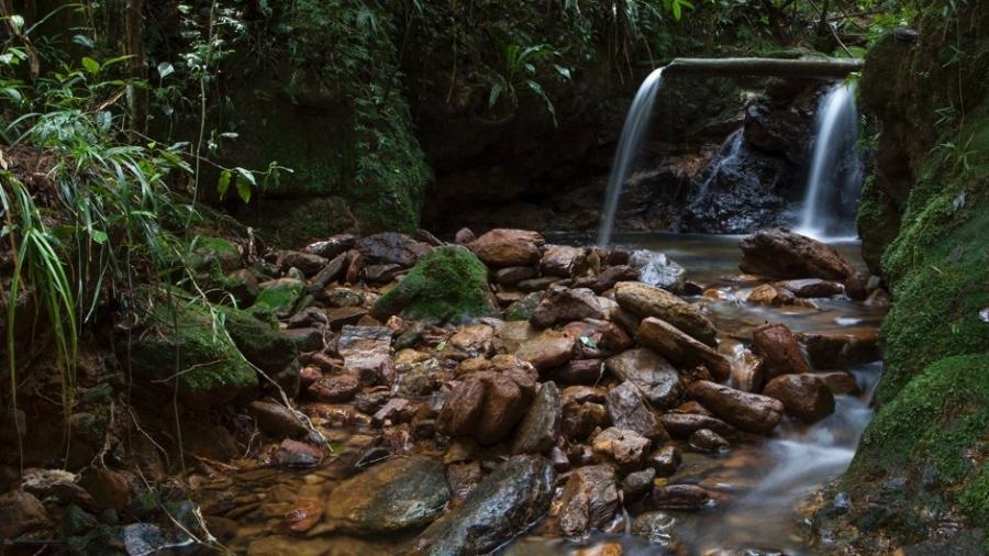 Trilha da Bica, no Parque Estadual da Serra do Mar - Acervo Fundação Florestal