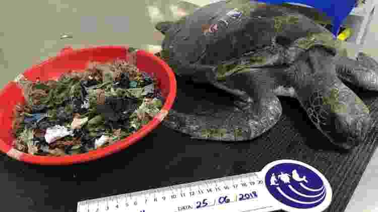 Lixo plástico encontrado no interior de tartaruga viva - GREMAR - GREMAR