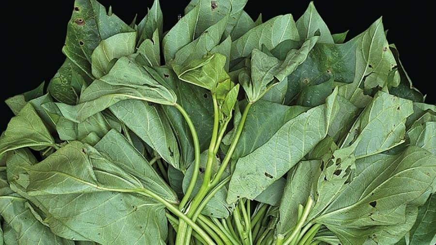 A folha da batata-doce é considerada uma PANC (Planta Alimentícia Não Convencional) - Divulgação/ Instituto Plantarum