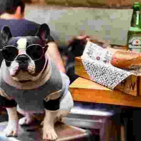 No Raw Burger, cachorros podem acompanhar seus donos durante as refeições - Divulgação