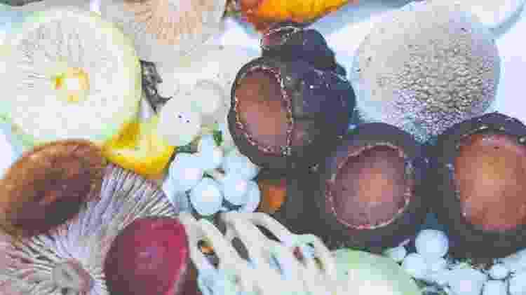 Rico em propriedades medicinais, você encontra o reishi em pó ou o cogumelo inteiro - Timothy Dykes/Unsplash