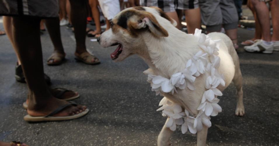 12.fev.2013 - Cachorro fantasiado durante o desfile do Bloco das Quengas durante a terça de Carnaval no Rio de Janeiro