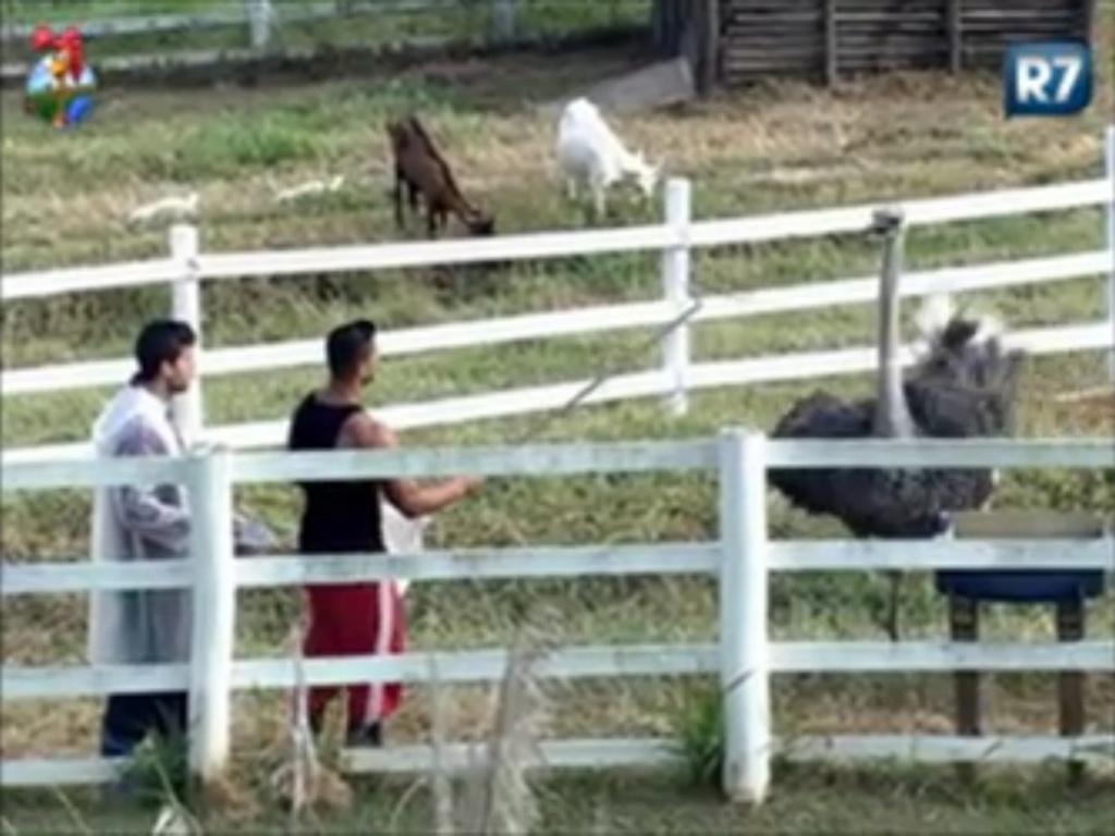 Vavá e Gustavo Salyer cuidam dos avestruzes durante a manhã (1/6/12)